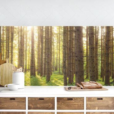 Rivestimento cucina - Raggi Di Sole Nella Foresta Verde