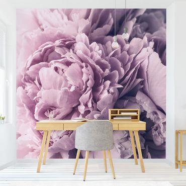 Carta da parati adesiva - Viola Peony Blossoms- Formato quadrato
