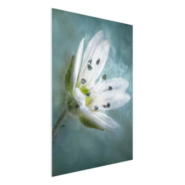 Quadro in forex - Bianco fiore su Blu - Verticale 3:4