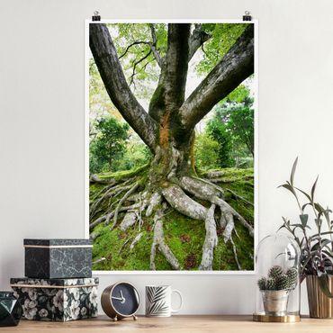 Poster - vecchio albero - Verticale 3:2