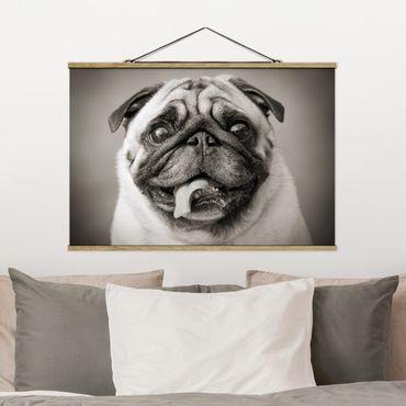 Foto su tessuto da parete con bastone - divertente Pug - Orizzontale 2:3