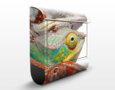 Cassetta postale Colorful Chameleon 39x46x13cm