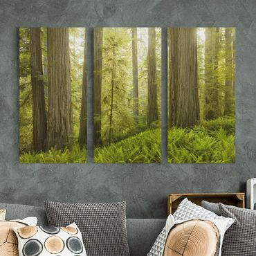 Stampa su tela 3 parti - Redwood State Park Forest View - Verticale 2:1