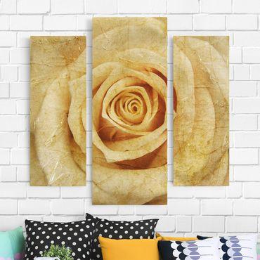 Stampa su tela 3 parti - Vintage Rose - Trittico da galleria