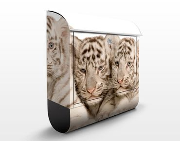 Cassetta postale Bengal Tiger Babys
