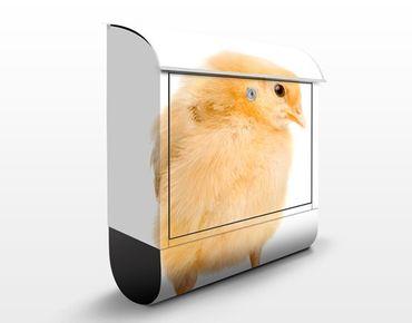 Cassetta postale Wispy Chick 39x46x13cm