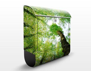 Cassetta postale Trees Of Life 39x46x13cm