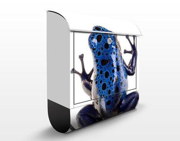 Cassetta postale Blue Frog 2 39x46x13cm