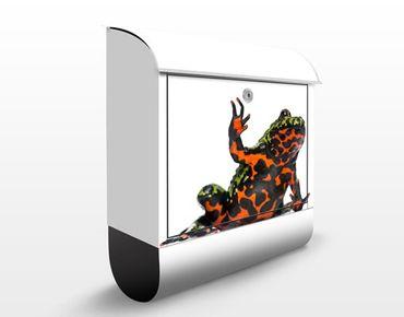 Cassetta postale Oriental Fire-Bellied Toad 39x46x13cm
