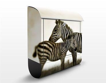 Cassetta postale Zebra Pair 39x46x13cm