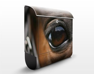 Cassetta postale Horse Eye 39x46x13cm