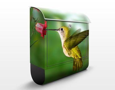 Cassetta postale Hummingbird And Blossom 39x46x13cm