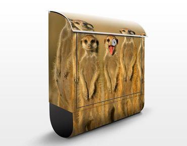Cassetta postale Meerkat Family 39x46x13cm