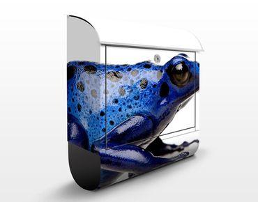 Cassetta postale Exotic Frog 39x46x13cm