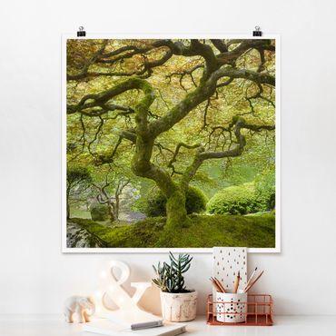 Poster - Verde Giardino Giapponese - Quadrato 1:1
