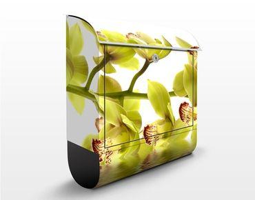 Cassetta postale design Splendid Orchid Waters 39x46x13cm