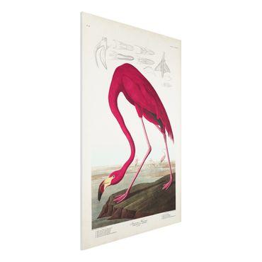 Stampa su Forex - Flamingo Consiglio American Vintage - Verticale 3:2