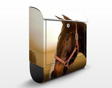 Cassetta postale Early Horse 39x46x13cm