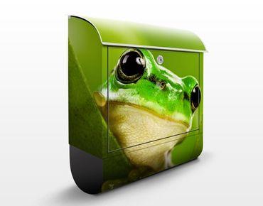 Cassetta postale Tree Frog 39x46x13cm