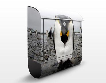 Cassetta postale Pinguin 39x46x13cm