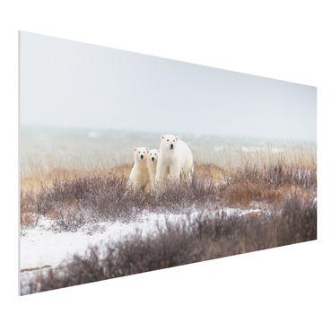 Quadro in forex - Orso polare e suoi cuccioli - Orizzontale 2:1