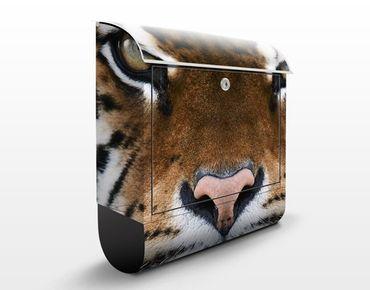 Cassetta postale Tiger Eyes 39x46x13cm