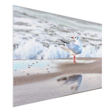 Stampa su Forex - Gabbiano Sulla Spiaggia Di Fronte Al Mare - Orizzontale 2:3