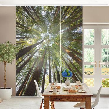 Tende scorrevoli set - Sequoia Tree Tops