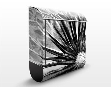 Cassetta postale Black & White Dandelion 39x46x13cm