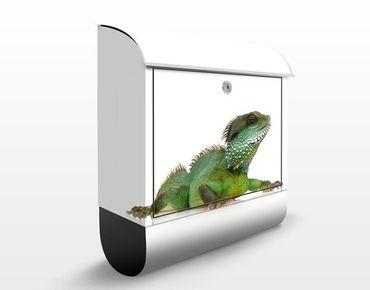 Cassetta postale Green Iguana I 39x46x13cm