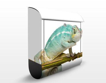 Cassetta postale Blue Chameleon 39x46x13cm