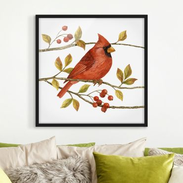 Poster con cornice - Birds And Berries - Northern Cardinal - Quadrato 1:1