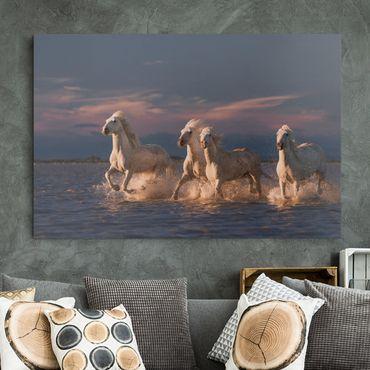 Stampa su tela - Cavalli selvaggi in Kamargue - Orizzontale 3:2