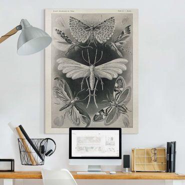 Stampa su tela - Vintage Consiglio falene e farfalle - Verticale 4:3