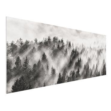 Quadro in forex - Raggi Luce nella foresta di conifere - Panoramico