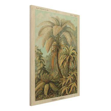 Stampa su legno - Botanica illustrazione d'epoca Foglie Felci - Verticale 4:3