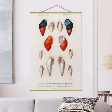 Foto su tessuto da parete con bastone - Conchiglie Vintage Consiglio Lumaca - Verticale 3:2