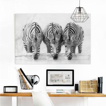 Stampa su tela - Zebra Trio in bianco e nero - Orizzontale 3:2