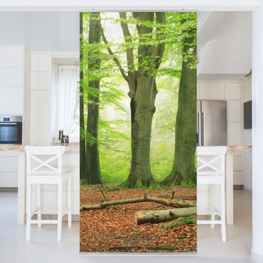 Tenda a pannello Mighty Beech Trees 250x120cm