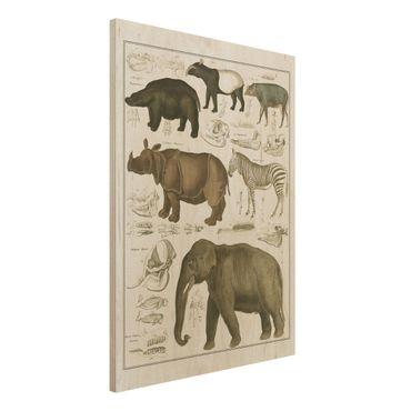 Stampa su legno - Vintage Consiglio elefanti, zebre e Rhino - Verticale 4:3