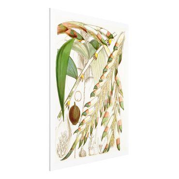 Stampa su Forex - Illustrazione Vintage Tropical Flowers III - Verticale 4:3