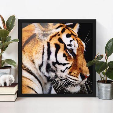 Poster con cornice - Tiger Beauty - Quadrato 1:1