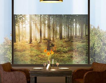 Decorazione per finestre no.CA48 Morning Forest