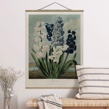 Foto su tessuto da parete con bastone - illustrazione d'epoca Botanica blu e bianco Giacinti - Verticale 4:3
