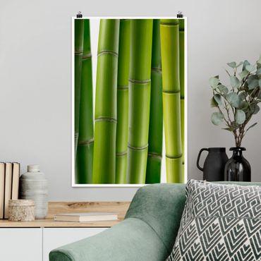 Poster - piante di bambù - Verticale 3:2