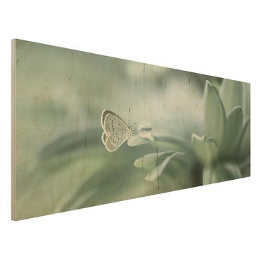 Quadro in legno - Farfalla E Gocce di rugiada In Pastel Verde - Panoramico