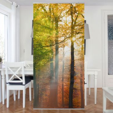 Tenda a pannello Morning Light 250x120cm
