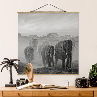Foto su tessuto da parete con bastone - Branco di elefanti - Quadrato 1:1