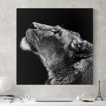 Stampa su tela - Ritratto di una leonessa - Quadrato 1:1
