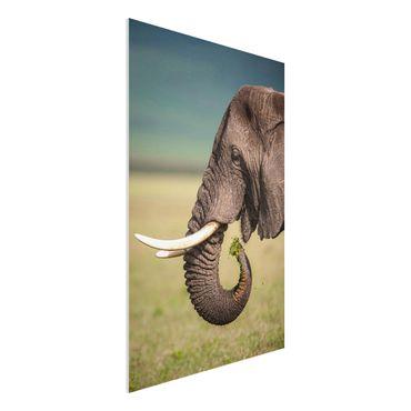 Quadro in forex - Elefanti alimentazione a Africa - Verticale 2:3